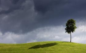 Картинка поле, небо, дерево, ветер