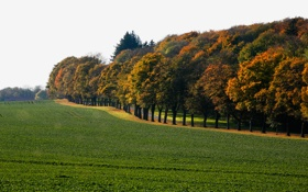 Картинка дорога, поле, небо, деревья, лесополоса, начало осени