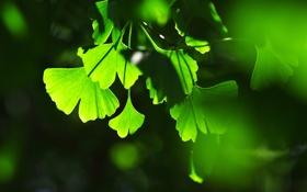 Обои листья, фон, игра, тени, зелёные, света