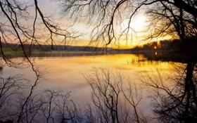 Обои закат, ветки, природа, река, вечер