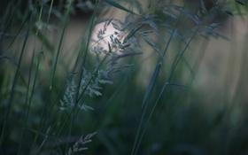 Картинка травинка, зелёный, трава, природа, зелень, растение