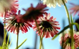 Обои цветы, фото, обои, растения, лепестки, стебель, Flowers