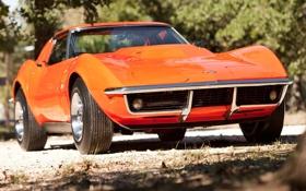 Обои деревья, оранжевый, Corvette, Chevrolet, 1969, шевроле, классика