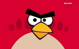 Обои птички, птица, angry birds, игра