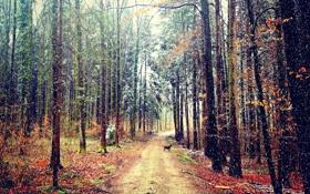 Картинка дорога, осень, лес, снег, собака