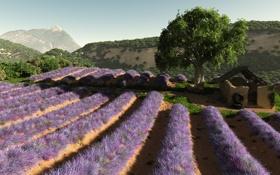 Обои поле, цветы, дерево, холмы, арт, ряды, лаванда