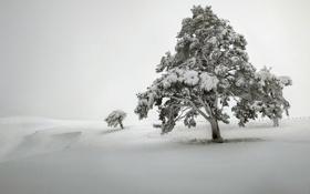 Картинка поле, снег, дерево