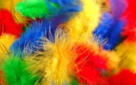 Обои перья, макро, цвет