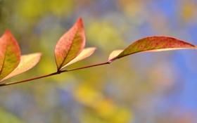 Обои листья, осень, небо, ветка