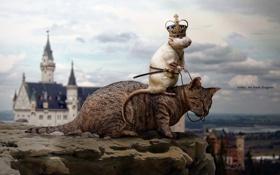 Обои небо, кот, облака, замок, корона, крыса