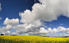 Картинка желтый, поле, небо, цветы