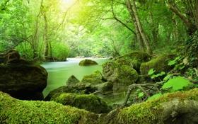 Обои природа, мох, река, деревья, кани