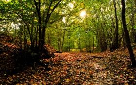 Картинка осень, лес, солнце, природа, листва
