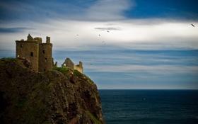 Картинка море, замок, чайки, Шотландия, Данноттар