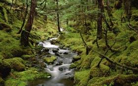 Картинка лес, вода, деревья, природа