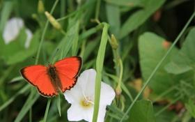 Обои лето, бабочка, зелень, цветок, прогулка, природа, отдых