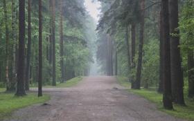 Обои дорога, деревья, природа, дерево, дороги, аллея, леса