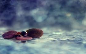 Картинка листья, вода, отражение, капля, Tranquility