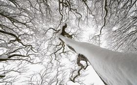 Картинка зима, снег, природа, дерево
