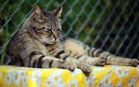 Обои лето, кот, усы, отдых, лапки