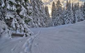 Обои зима, лес, облака, снег, следы, ёлки