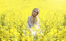 Картинка Girl, Model, Yellow, View, Alessandro Di Cicco, Fields. Gold. Flowers