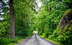 Обои дорога, лес, лето, листья, деревья, камни, финляндия