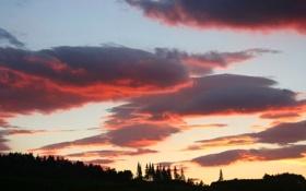 Обои закат, облака, горизонт, деревья, силуэт, небо