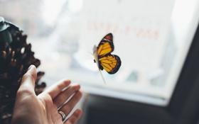 Обои рука, насекомое, бабочка, крылья, кольцо, ладошка, ладонь