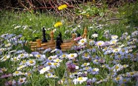 Обои лето, цветы, природа, шахматы