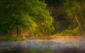 Картинка мостик, парк, озеро, лето