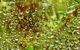 Обои зелень, вода, капли, Паутина