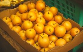 Картинка яблоки, желтые, много