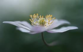 Картинка цветок, макро, растение, лепестки