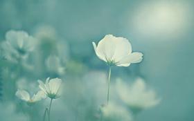 Обои bokeh, petals, stalks, flowers