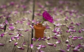 Картинка цветок, цветы, фон, розовый, widescreen, обои, настроения