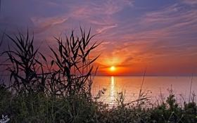 Картинка закат, озеро, камыш