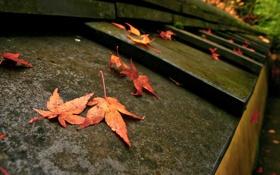 Обои осень, макро, листва