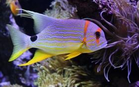 Картинка море, подводный мир, underwater, sea, coral, коралловые, Beautiful fish