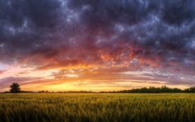 Картинка поле, трава, облака, закат, природа, пейзажи, Nature
