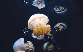 Обои аквариум, вода, много, медуза