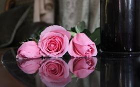 Обои розы, отражение, розовые, цветы