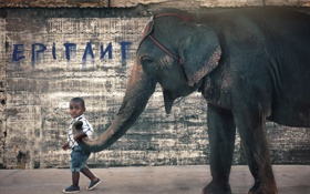 Обои слон, ситуация, мальчик