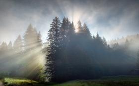Картинка лес, рассвет, утро, лучи солнца