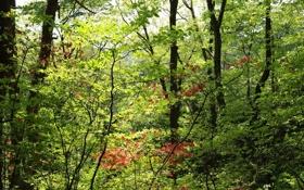 Картинка зелень, лес, листья, деревья, ветки, листва