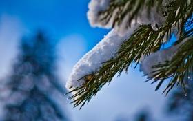 Картинка иголки, снег, небо, ветка, хвоя, дерево