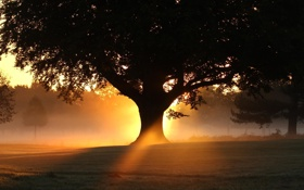 Картинка лето, свет, дерево, вечер