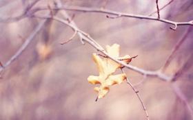 Картинка осень, макро, природа, лист, ветка, размытость, дубовый