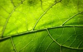 Картинка зелень, листья, листва, листок, листочки, листки, листики
