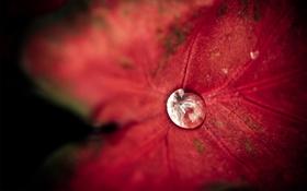 Картинка вода, роса, фон, листок, капля